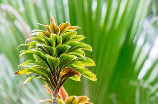 ハワイ植物